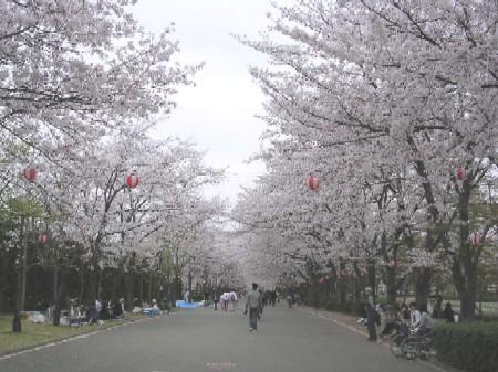 Sakuraroad